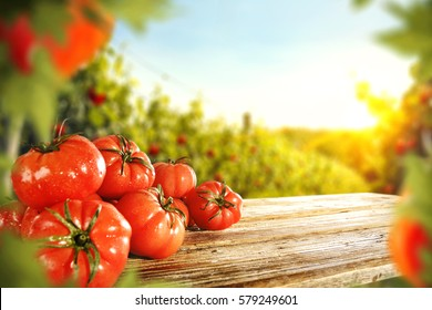 fresh tomatoes and summer day