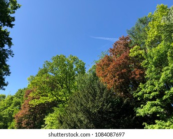 fresh trees and colors in spring