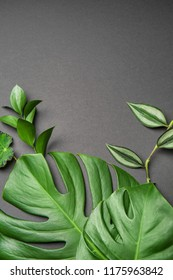 Fresh tropical leaves on grey background
