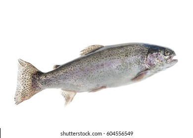 fresh, Trout fishing, river trout Raimbox breed curtout