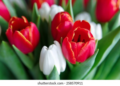 Fresh tulips for background