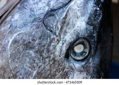Fresh Tuna eye on fresh seafood market