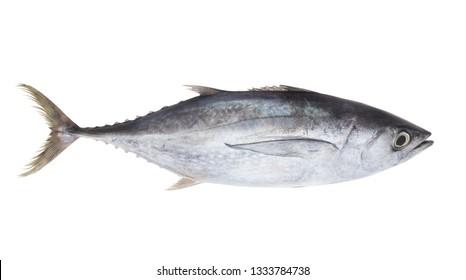 Fresh tuna fish isolated