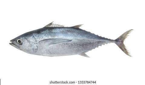 Fresh tuna fish isolated on white background