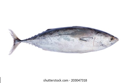 Fresh tuna fish isolated on white background