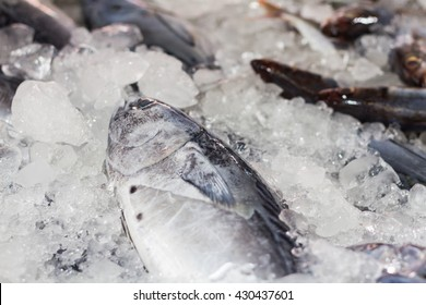 Fresh tuna on ice in the local market ,blurry