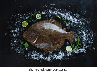 Fresh turbot fish on ice on a black metal table top view