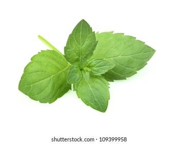 Fresh twig of mint