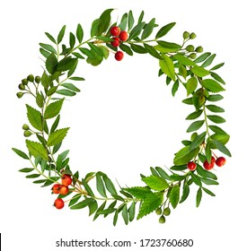 Fresh twigs with green leaves and berries in a round floral frame isolated on white background
