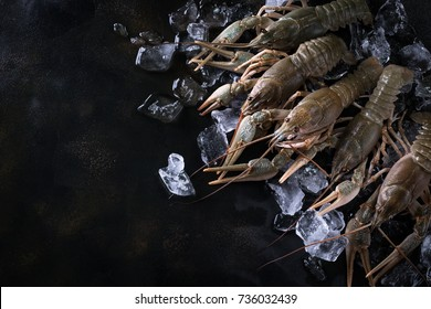 Fresh uncooked raw group of crayfish ready for cooking