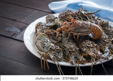 Fresh uncooked Spiny lobsters, raw group of crayfish ready for cooking, selective focus and shallow dof.