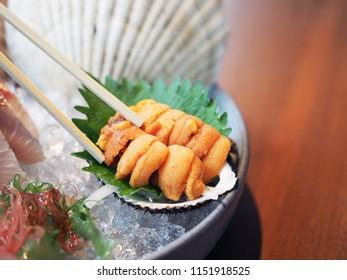 Fresh uni sashimi on shell over ice with blur background, Japanese traditional food.