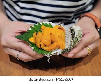 Fresh uni or sea urchin sashimi served on shell over oba leaf, sliced of chinese radish and ice. Japanese traditional food eat with dap of wasabi and shoyu sauce.