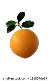 Fresh valencia orange navel orange isolate on white background with clipping path