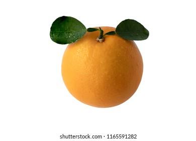 Fresh valencia orange navel orange on white background with clipping path