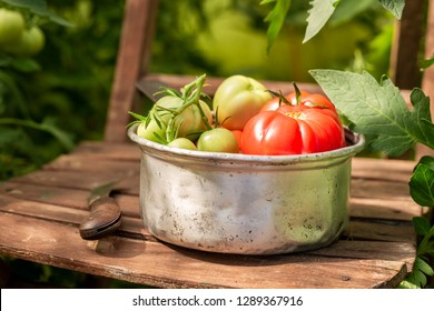 Fresh various tomatoes in a small greenhouse