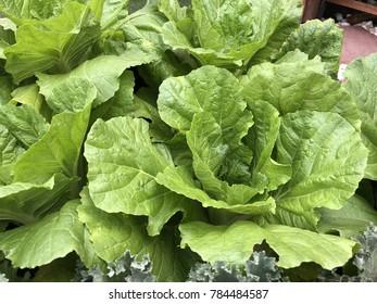 The fresh vegetable