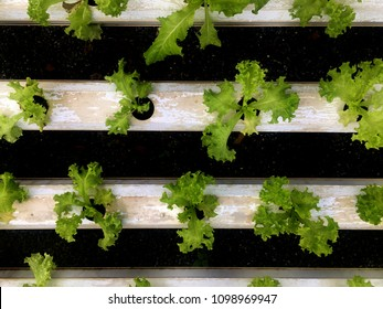 The fresh vegetable organic garden (hydroponics with vertical farming).The natural grown without using chemicals and non toxic.