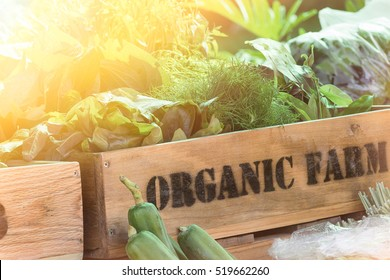 Fresh vegetable organic produce from farm in wooden box with sunlight