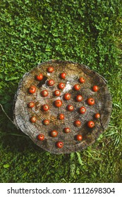 Fresh vegetables. Cherry tomatoes with rosemary on wood in vegetable garden
