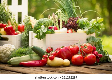 Fresh vegetables in the crates in the garden
