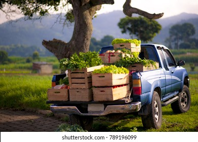 Fresh vegetables on blue pick.up truck.