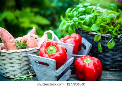Fresh vegetables on wood in garden. Food layout. Vegetables variety