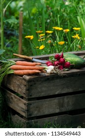 Fresh vegetables on a wooden box in the home garden. Green background from flowers and grass. Organic fresh vegetables. Carrots, cucumbers, tomatoes, spring onions, radish.