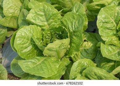 Fresh Vegetables are taken to be Wonderful food.