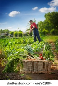 Fresh vegetables in wicker basket in garden with farmer in back, Vegetable picking concept