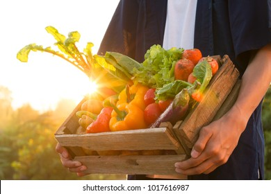 Fresh vegetables in wood box holding by farmer at beautiful sunset, Vegetable garden and healthy eating concept