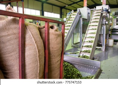 Fresh virgin olive oil production at a cold-press factory after the olive harvesting, Crete, Greece.