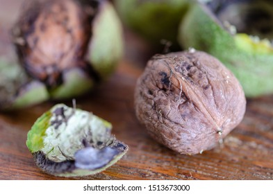 Fresh walnuts with  green shells on a wooden surface. Walnuts, shelled and unshelled.