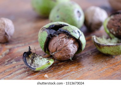 Fresh walnuts with  green shells on a wooden surface. Walnuts, shelled and unshelled,close up.