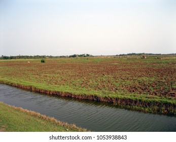 A fresh water canal flows just middle of the crop fields. Location - Sunderbans, West Bengal, India