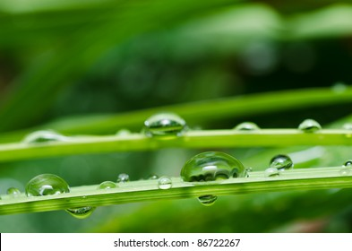 fresh water drops in green nature or in forest