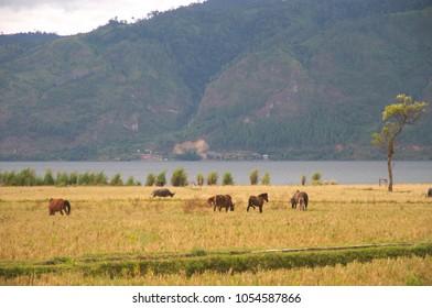 Fresh water lake (Danau Laut Tawar) in Takengon Aceh, Indonesia