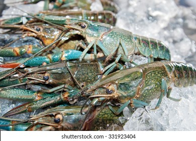 Fresh water lobster or Macrobrachium rosenbergi on display for sale during a weekend wet market. The blue claw lobster is rared for commercial purposes in Sabah, Malaysia.