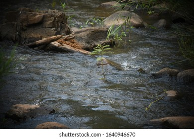 Fresh water stream running over rounded rocks