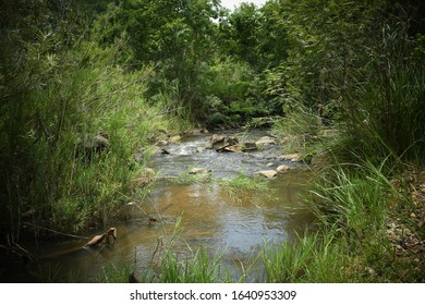 Fresh water stream running through luscious green vegetation