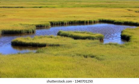 Fresh water stream through meadow