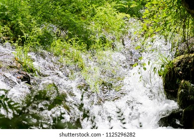 fresh water waterfall with plants in forest river of Galicia , Spain