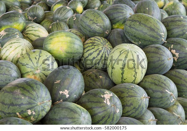 fresh watermelon in agriculture market