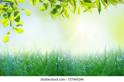 Fresh wet grass and leaves of tree in the early morning with droplets of dew close up of a macro on blurry light green nature background. Spring summer template, stage frame.