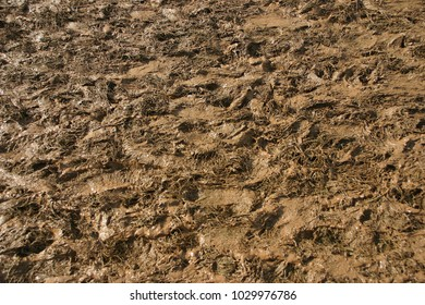 Fresh wet mud at a Welsh music festival