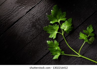 Fresh Wet Parsley Leaves on Black Wood