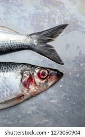 Fresh wet silver herring fishes with contransting red eyes on silver plate macro close up shot
