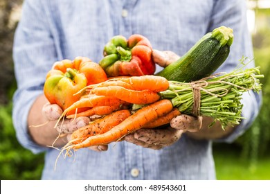 Fresh wet vegetables in gardener's hands close up. Spring - harvest from the garden. Bell pepper, zucchini and bunch of young carrots.