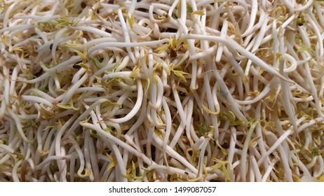 fresh white clean bean sprout