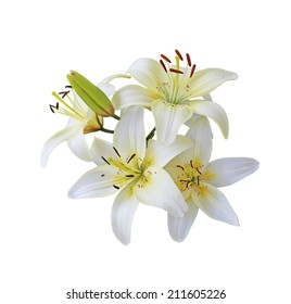 Fresh white lily flowers branch isolated on white